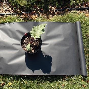 Planters Paper (2 X 50)