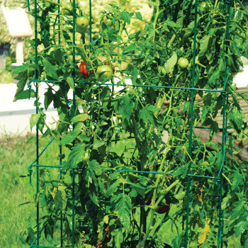 Jumbo Tomato Cages - Green