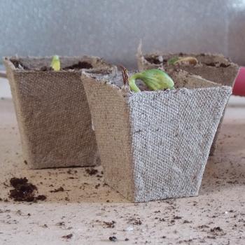 "Jiffy Peat Pots - 2.25"" Square"
