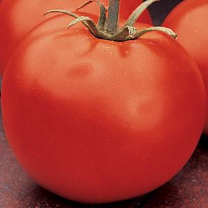 Determinate Tomato Plants