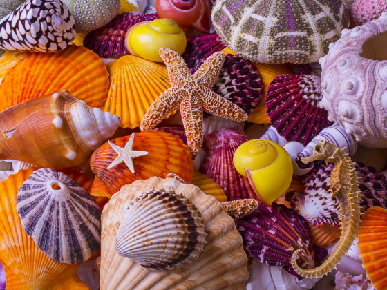 Sea Shell Treasures Jigsaw Puzzle
