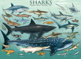 Sharks Kid's Jigsaw Puzzle