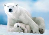 Polar Bear & Baby Jigsaw Puzzle
