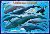 Whales & Dolphins Kid's Jigsaw Puzzle