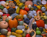 Autumn Harvest Jigsaw Puzzle