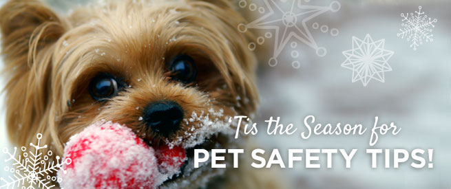 'Tis the Season for Pet Safety Tips!