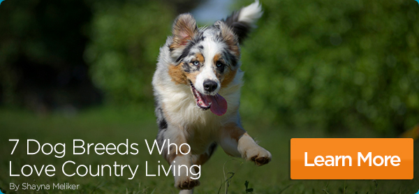 Dog running with caption: 7 Dog Breeds Who Love Country Living