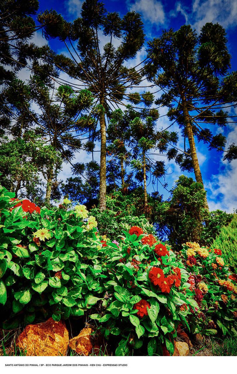 Eco Parque Jardim dos Pinhais
