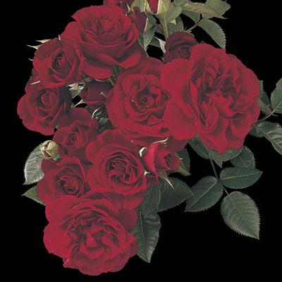 Valentine's Day™