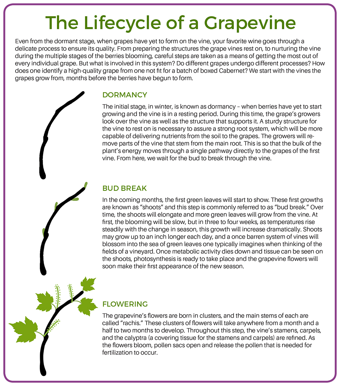 The Lifecycle of a Grapevine