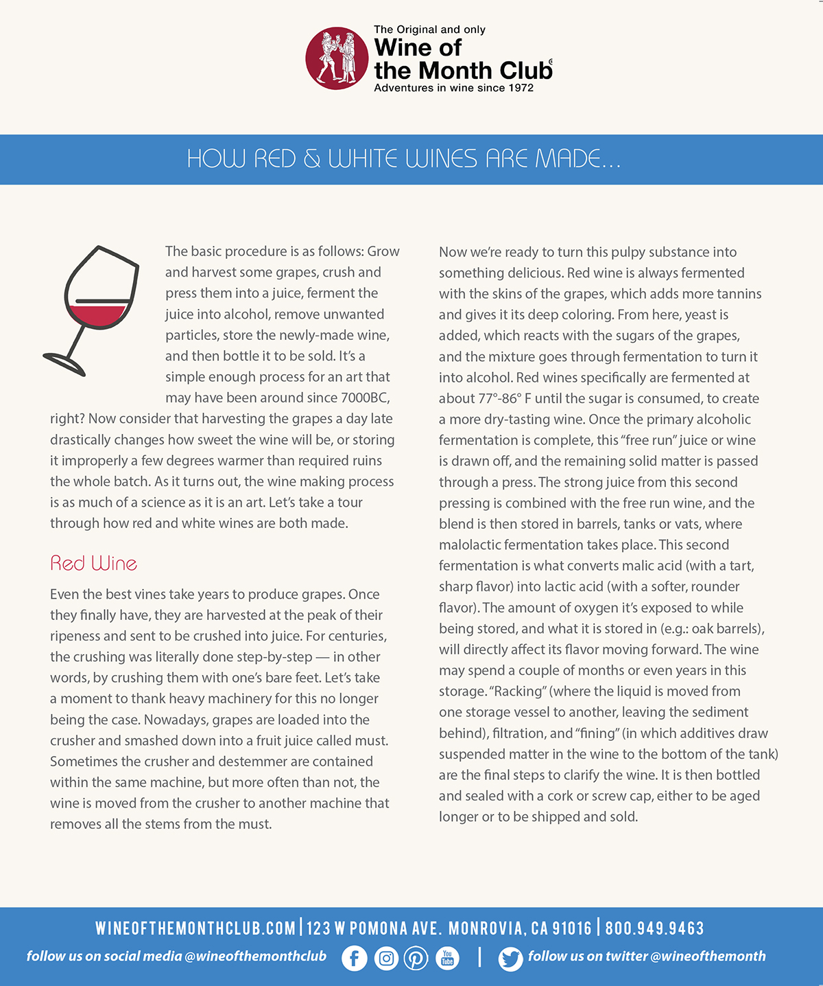 The Differences Between Red & White Wine Making