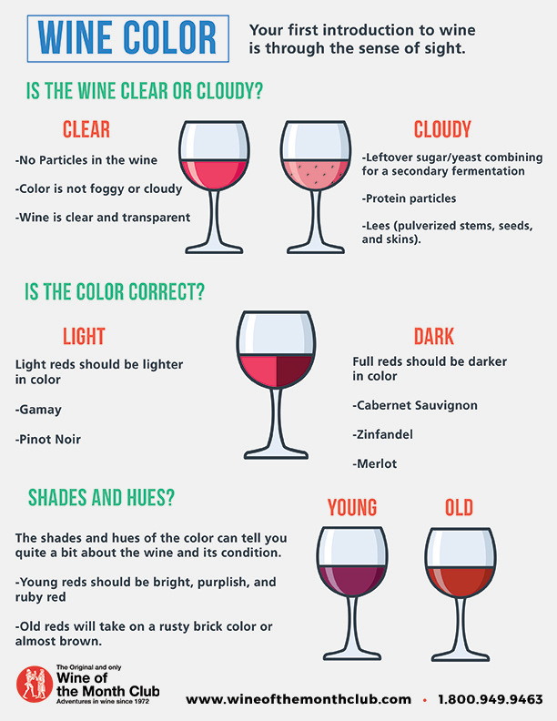 Wine Color Infographic