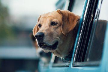 Cabify ofrece servicio amigable a mascotas, Cabify Pet