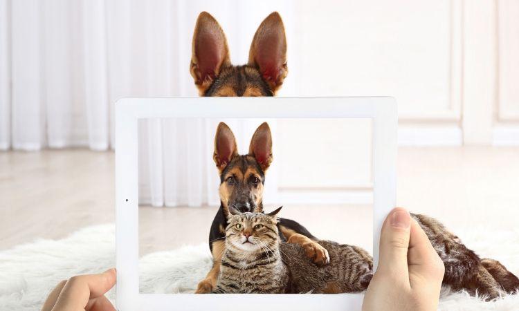 El negocio de las mascotas en eCommerce ocupa el 30% en México