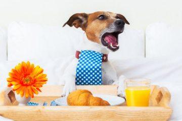 3 apps de hospedaje para perros en México: disfruta tus vacaciones sin descuidar a tu mascota