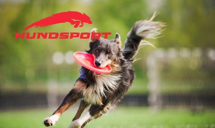 Hundsport te ayuda a mantener a tu mejor amigo en óptimas condiciones sin salir de casa