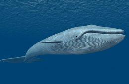 la ballena azul juego