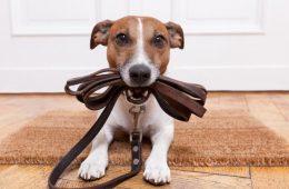 Rover compra DogBuddy: dos de los líderes mundiales del dogsitting se fusionan tras una ronda de financiación millonaria