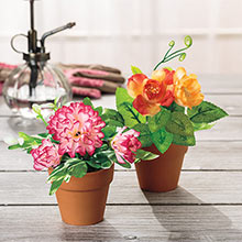Pretty Posies in Pot - Rose