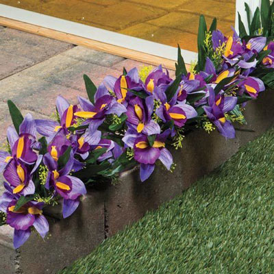 All-Weather Forever Blooms - Dutch Iris