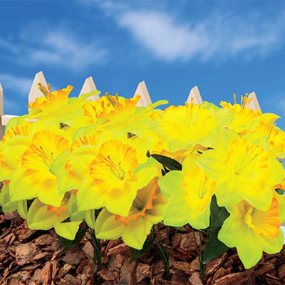 Forever Blooms Daffodils