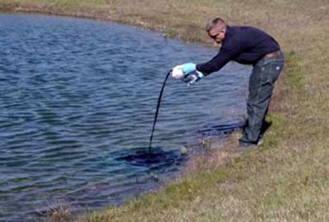 Choosing to Use Pond Dye