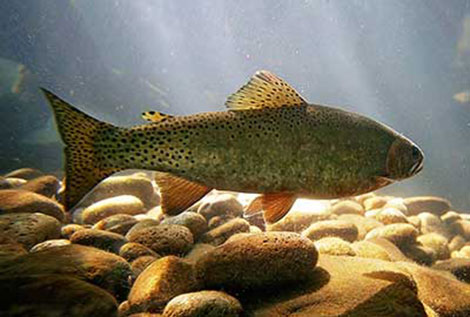 Promoting Fish Populations in Ponds & Lakes