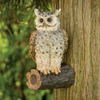 Life-Size Owl On A Branch Tree Hanger