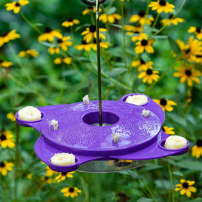 Butterfly Feeder And Nectar