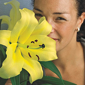 Summer Stunner Lily Tree® Collection