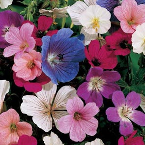 Hardy Geranium Mixture Super Sak®