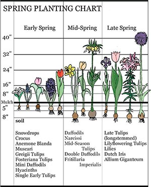 Bloom Time Landscaping With Early Spring Bulbs Breck S