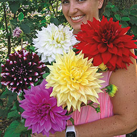 Giant Dinnerplate Dahlias