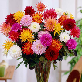 Karma Dahlias<sup>®</sup> Mix