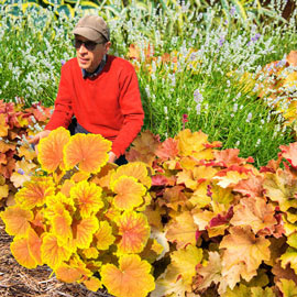 Heuchera High Hopes