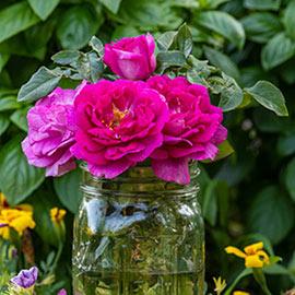 Rose Perfume Factory™