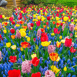 Endless Spring Flower Bulb Mix