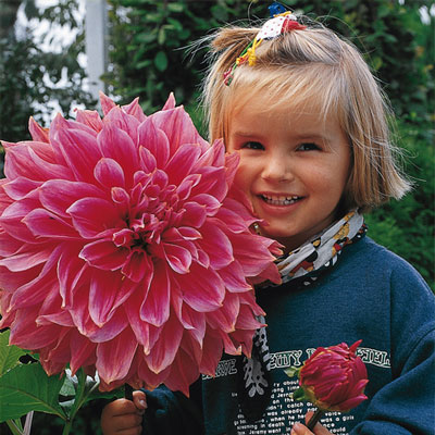 Giant Dinnerplate Dahlia Emory Paul