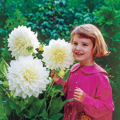 Giant Dinnerplate Dahlia Fleurel<sup>&reg;</sup>