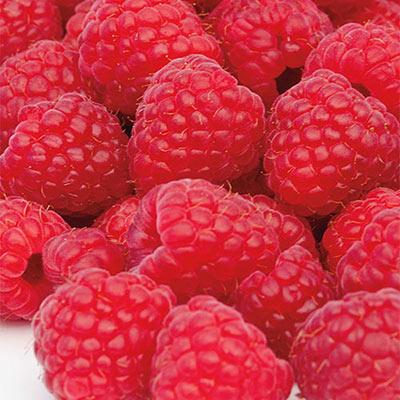 Raspberry Latham