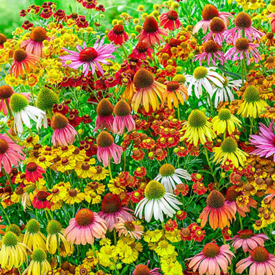 Endless Summer Perennial Mix