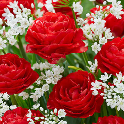 Fandango Flower Duet