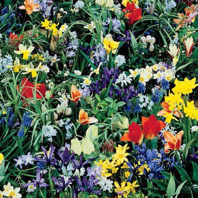 Wild Flower Bulb Mix