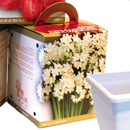 Narcissus Paperwhite Ziva Gift Kit