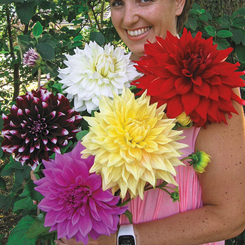 Giant Dinnerplate Dahlia Mix  sc 1 st  Van Bourgondien & Sun-Loving Dahlias: Giant Dinnerplate Dahlia Mix