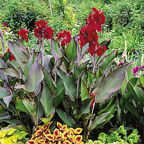 Canna pk 13/14 flowering bloom booster instructions & reviews.