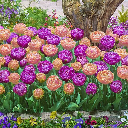 Spring Delight Tulip Mix