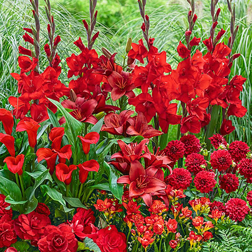Red Flower Bulb Collection
