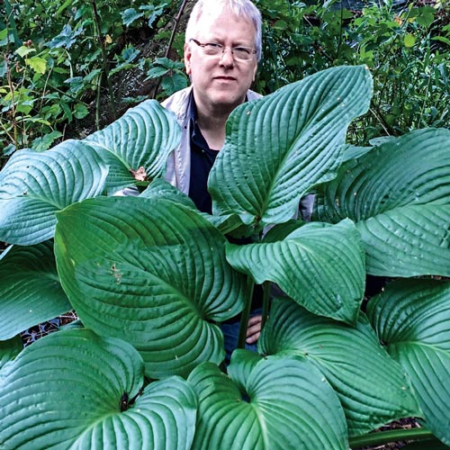 Hosta Kingsize