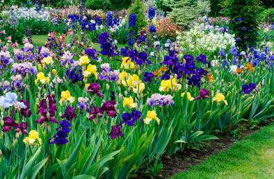 K van bourgondien sons wholesale flower bulbs and perennials mixes mightylinksfo